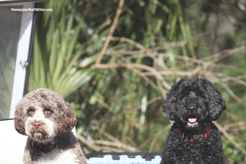 BHI Dogs