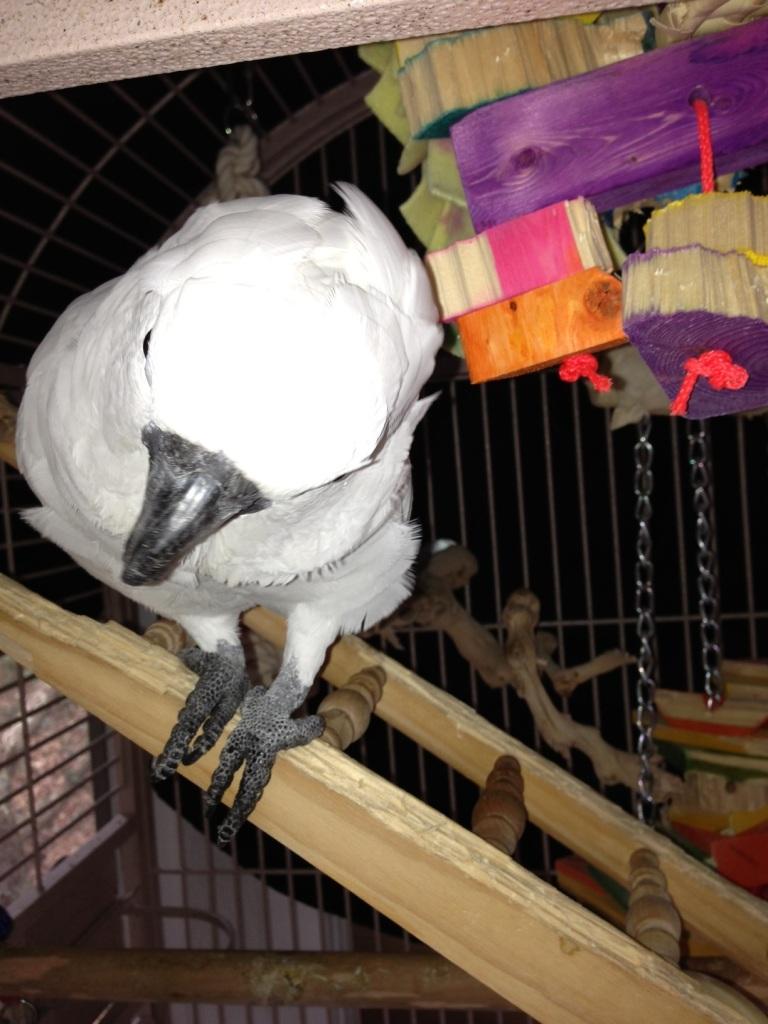 Ze' Bird
