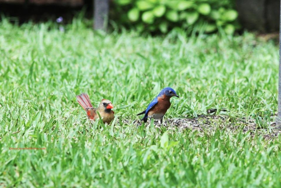 Backyard Diversity